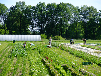 Gärtnerhof Bienenbüttel: Feld mit arbeitenden Menschen