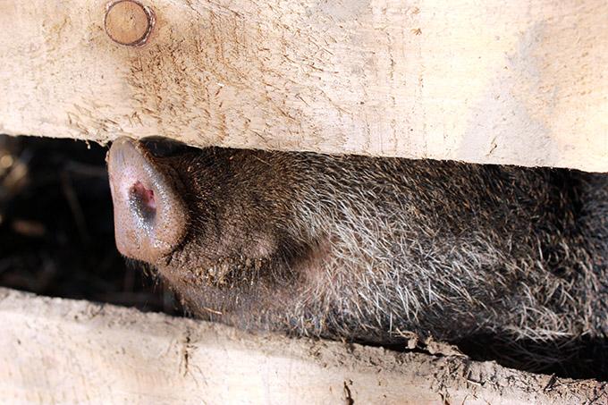 Schweinenase :)
