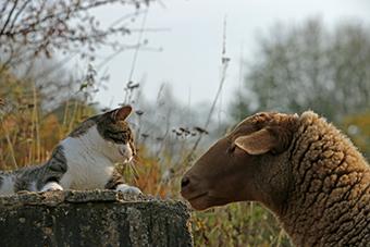 Kater Klaus und Schaf schauen sich in die Augen