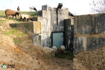 Schafe grasen vor und auf einem Bunker auf dem Land der Tiere