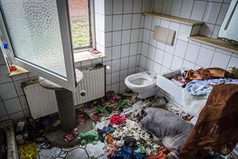 Hier ein Bild aus einem privaten Kontext - ein Schwein, das in Dreck und seinen Ausscheidungen in einem Badezimmer vor sich hinvegetiert