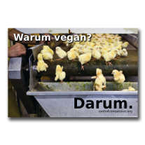 chicken on an assembly line before shredding and the question: Why vegan?/Warum vegan?